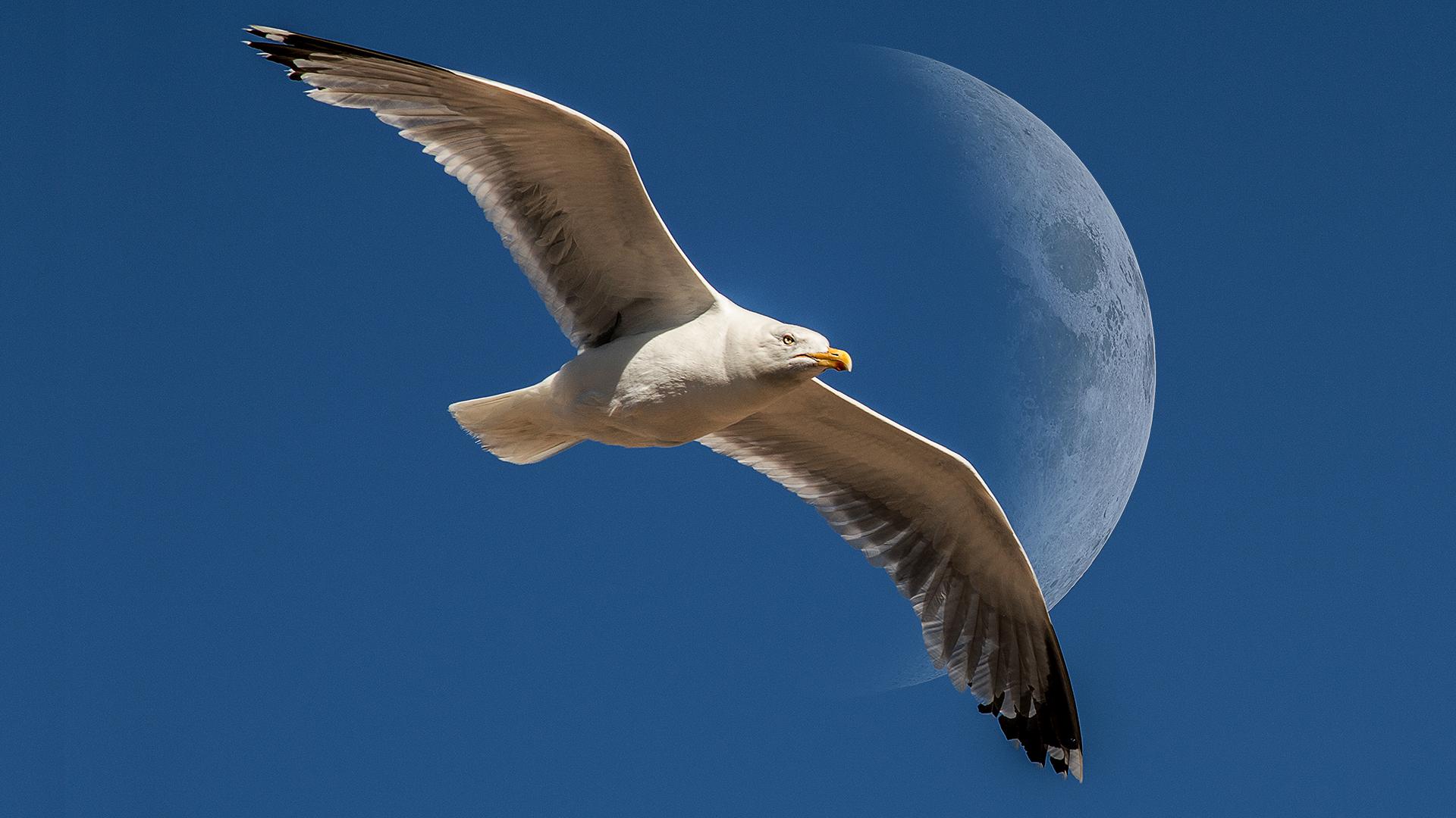 seagull21080